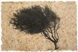 Crataegus by Emma Buckmaster, Artist Print, Etching on hawthorne leaves