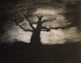 the east wind blows by Emma Buckmaster, Artist Print, Etching